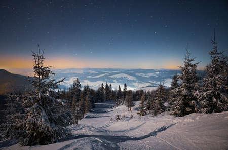 Beautiful nature starry sky with snowy fir Standard-Bild