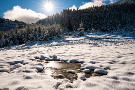 Small puddle of melted snow in the spring sun in the carpathian mountains Imagens