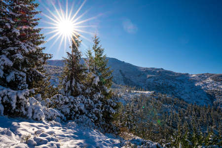 Carpathian mountains and hills with snow-white snow drifts and evergreen trees illuminated by the bright sun Standard-Bild