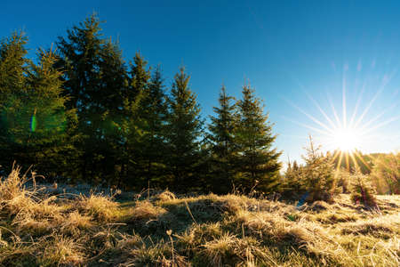 Funny cute Christmas tree sprinkled with white snow on a sunny meadow in the Carpathian mountains Standard-Bild