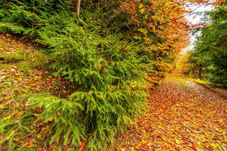 Beautiful path in a nature park strewn with autumn leaves
