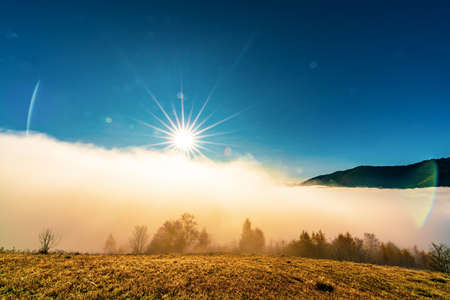 Early morning and frozen grass covered in fog under the bright sun