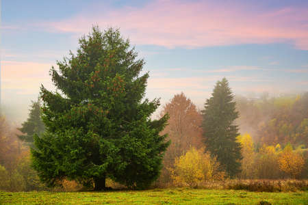 Colorful trees in the Carpathian mountains covered with thick gray fog Standard-Bild