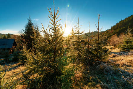 Funny cute Christmas tree sprinkled with white snow on a sunny meadow in the Carpathian mountains Imagens