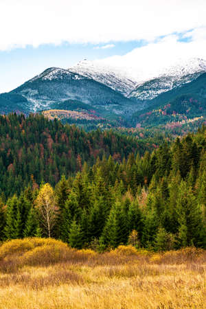 Beautiful forests covering the Carpathian mountains and a small village