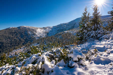 Carpathian mountains and hills with snow-white snow drifts and evergreen trees illuminated by the bright sun Imagens
