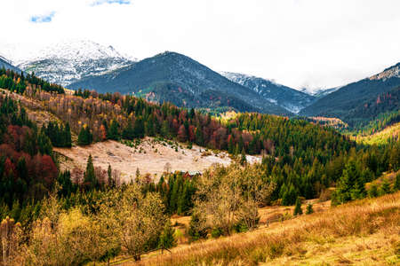 Deforestation in the mountains of Carpathian, view on a beautiful cloudy warm day