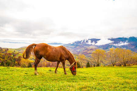 A handsome stallion walks in the field and eats juicy grass Imagens
