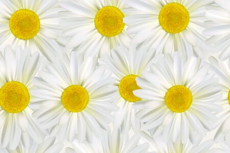 Beautiful vector flower background with realistic camomiles. Horizontal romantic creative floral wallpaper template.