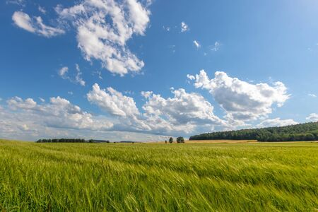 Green meadow under blue sky with clouds. Фото со стока - 128924024