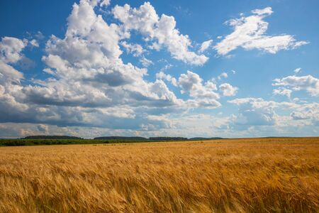 cloudy sky over golden field. rain before. Фото со стока - 128924025