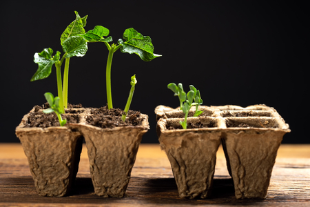 sprouted plant little green plants in pot Archivio Fotografico