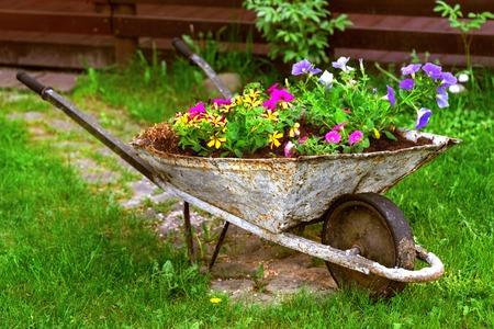 old rusty Wheelbarrow flowerbed colorfull flowers garden decor Archivio Fotografico