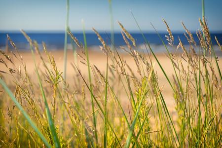 Dune grass blurred sand beach baltic sea