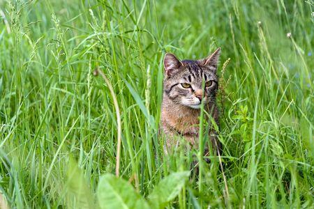 cat sit in green grass closeup