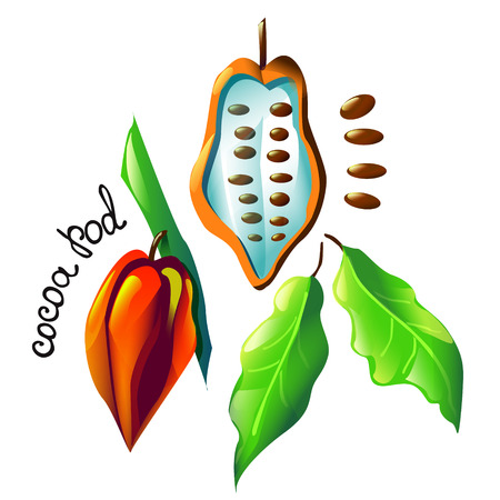 Vector image with isolated cocoa pod, cocoa beans, tree and leaves. Cartoon design for cocoa mug, cooking or cosmetic oil label, logo, ice cream or chocolate cover, recipe, biology book or poster Illustration