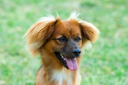 lingua: Dog look away