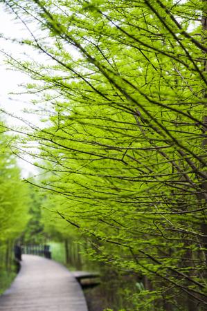 Groene planten Stockfoto