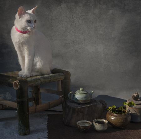 Sluit omhoog aan een witte kat op een krukje