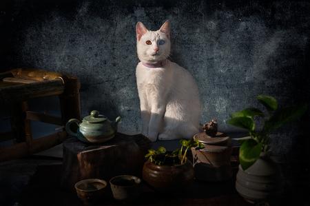 Witte kat Stockfoto