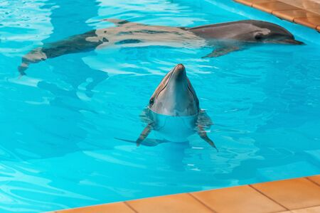 A couple of dolphins in the pool. Pure clear blue water Imagens