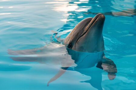 Portrait of a dolphin. Dolphin in the pool posing for a photographer