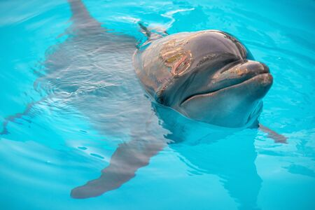 Portrait of a dolphin. Dolphin in the pool close-up