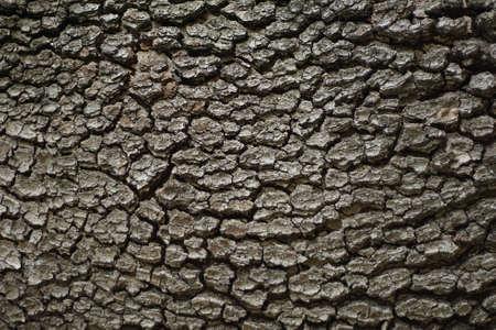 A close-up of a tree bark texture. The tree bark has deep ridges and furrows.