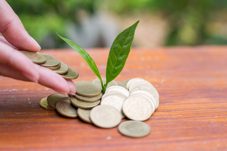 Investment and financial concept,Woman hand putting coin of growth to profit finance.