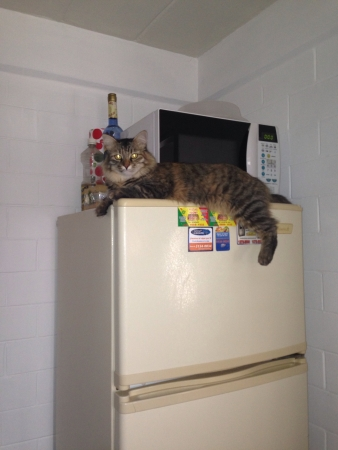 cat goddess: My cat watching me like a goddess