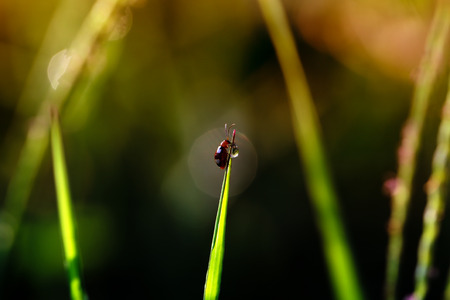 Small insects eating water on top of grass with a natural blurred background