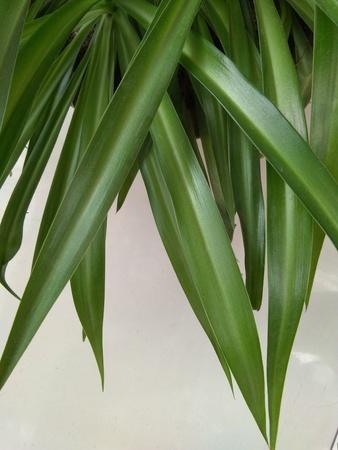Green leaves Banco de Imagens