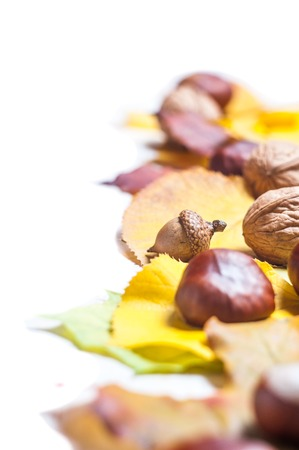 Autumn nature concept. Fall fruit and vegetables on wood Thanksgiving dinner