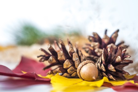 Pine cone acorn and autumn birch leaf photo