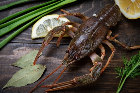 Crayfish. Red boiled crawfishes on table in rustic style, closeup. Lobster closeup Reklamní fotografie
