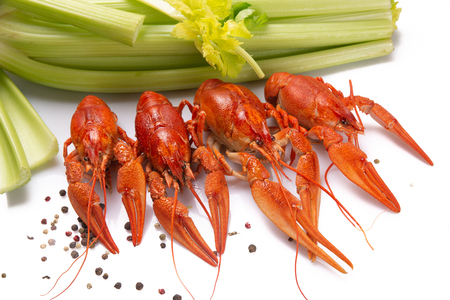 Red boiled crayfish on the white background. Copy space, card 스톡 콘텐츠