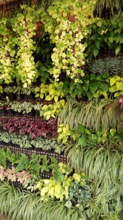 Green planting wall Banco de Imagens