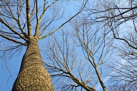 nacked: tree