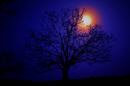 tree silhouette under sunset