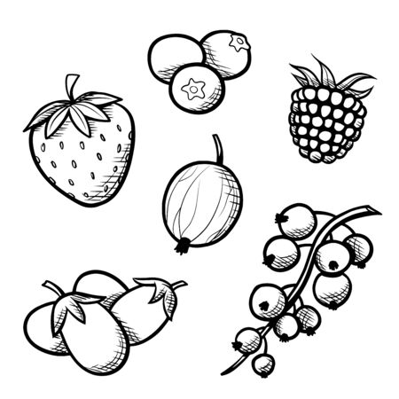 Berries collection hand drawn vector illustration Ilustracja