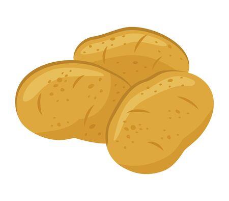 Potatoes isolated on white background, vector illustration. Ilustracja