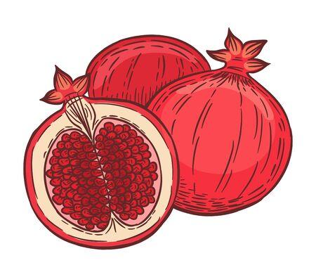 Tasty and fresh pomegranate fruits, hand drawn vector illustration.