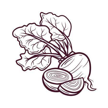 Sliced beet hand drawn vector illustration ベクターイラストレーション