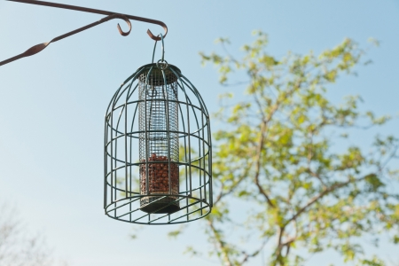 Bird feeding cage hanging in garden in spring time. photo