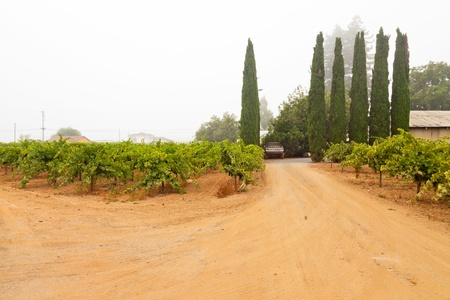 Winery landscape with car in the mist. Napa Valley. California. USA. photo