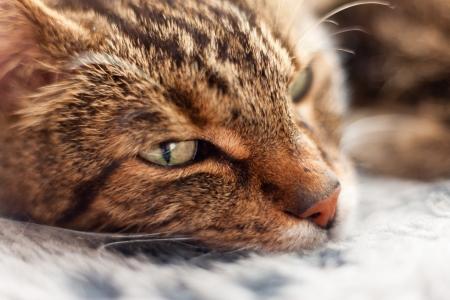 grey rug: Close-up of lazy tabby cat sleeping on grey rug.
