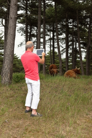 Senior retired man photographing scottish highlander cows with tablet outdoors in meadow. photo