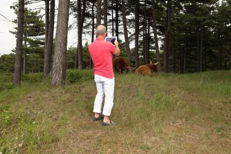 highlander: Hombre jubilado mayor que fotograf�a ESCOC�S vacas con tabletas al aire libre en una pradera. Foto de archivo