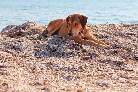 Street dog on the beach of Corfu in summer. Ionian island. Greece. Blue sky. photo