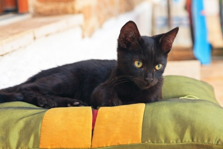 Playful curious black street kitten on pillow outdoors. Corfu. Greece. photo